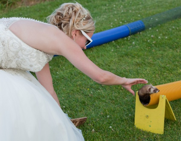 Social events, Ferret Racing, Wild In The CountryLtd