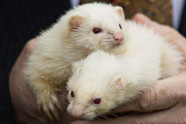 Ferret Racing - Corporate Entertainment with Wild In The Country Ltd