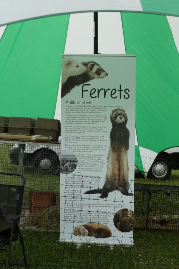 Ferret Racing Educational Board