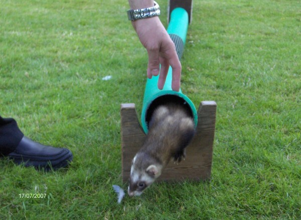 Ferret Racing Corporate Event Hertfordshire
